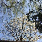 http://oss.suning.com/lzcourse/longzhupic/5a0a5957-877f-4766-947f-535878db114f.jpg